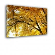 Jesienne drzewo nr 2563