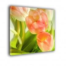Tulipany nr 2566