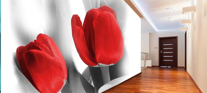Fototapeta kwiaty tulipany