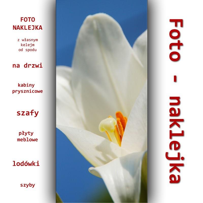 Foto-naklejka biały kwiat lilii