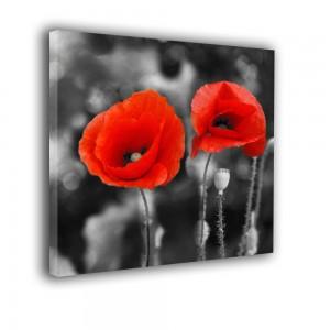 Obraz maki czarno białe z czerwonym akcentem nr 2574