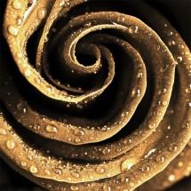Aranżacja jadalni z fototapetą o motywie złotej róży
