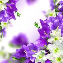 fototapeta kwiaty