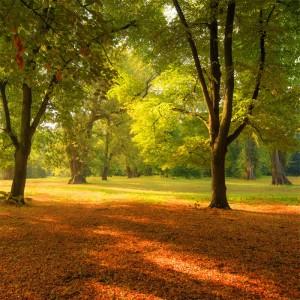 Fototapeta między drzewami w parku