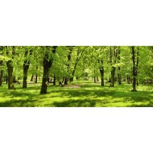 Fototapeta Aleja Drzew