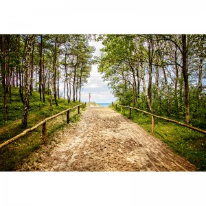 Fototapeta droga w lesie
