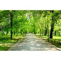 Fototapeta park, drzewa, alejka