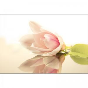 Fototapeta nowoczesna magnolia