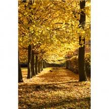 Fototapeta Aleja Drzew - Jesień