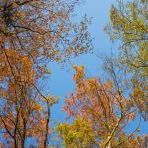 Fototapeta na sufit - Jesienne niebo