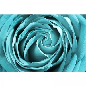 Tapeta turkusowa róża