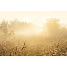 Fototapeta łąka
