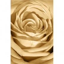 Fototapeta róża do salonu