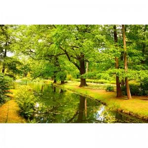 Foto-tapeta drzewa nad rzeką