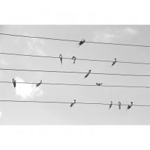 Fototapeta ptaki na drucie