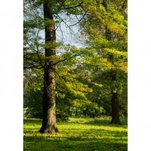 Fototapeta magiczne drzewo