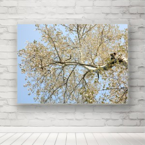 Plakat korona drzewa