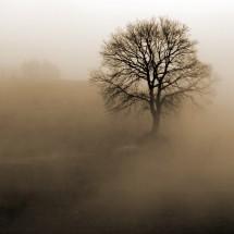 Fototapeta na ścianę drzewo we mgle