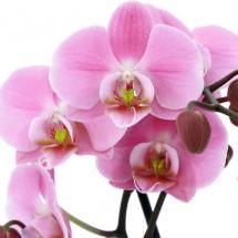 Fototapeta orchidea w aranżacji salonu