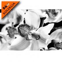 Duże kwiaty - czarno biała fototapeta - aranżacja