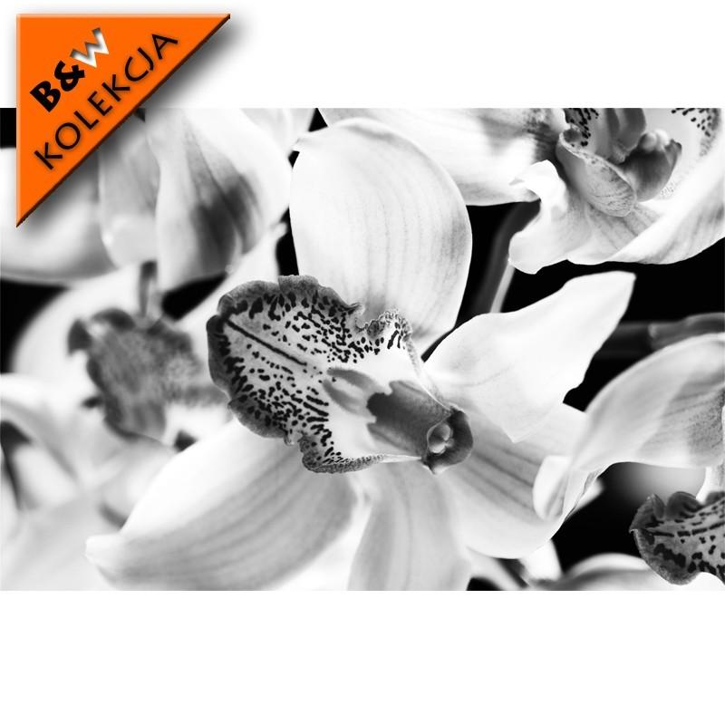 Fototapeta kwiaty - czarno biała