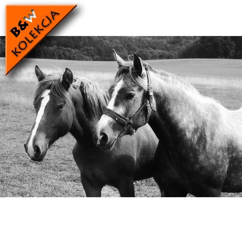Fototapeta czarno biała - konie