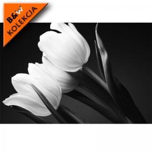Fototapeta szarości w tulipanach