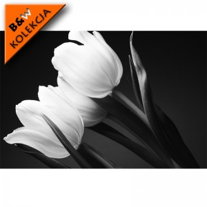 Fototapeta szare tulipany