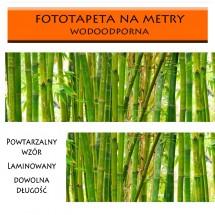 Fototapeta zmywalna bambusy - aranżacja restauracji