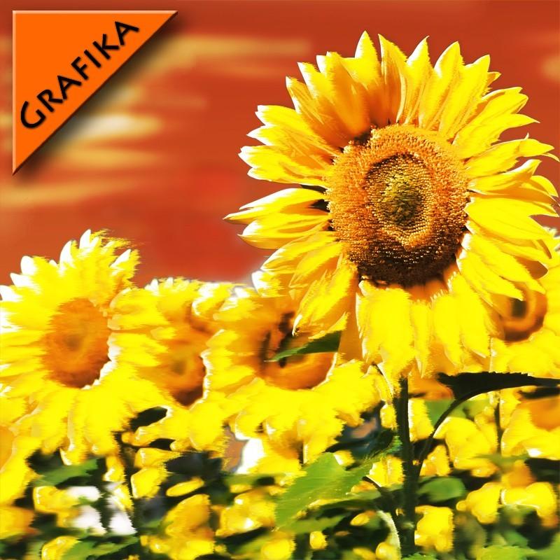 Fototapeta graficzna słoneczniki