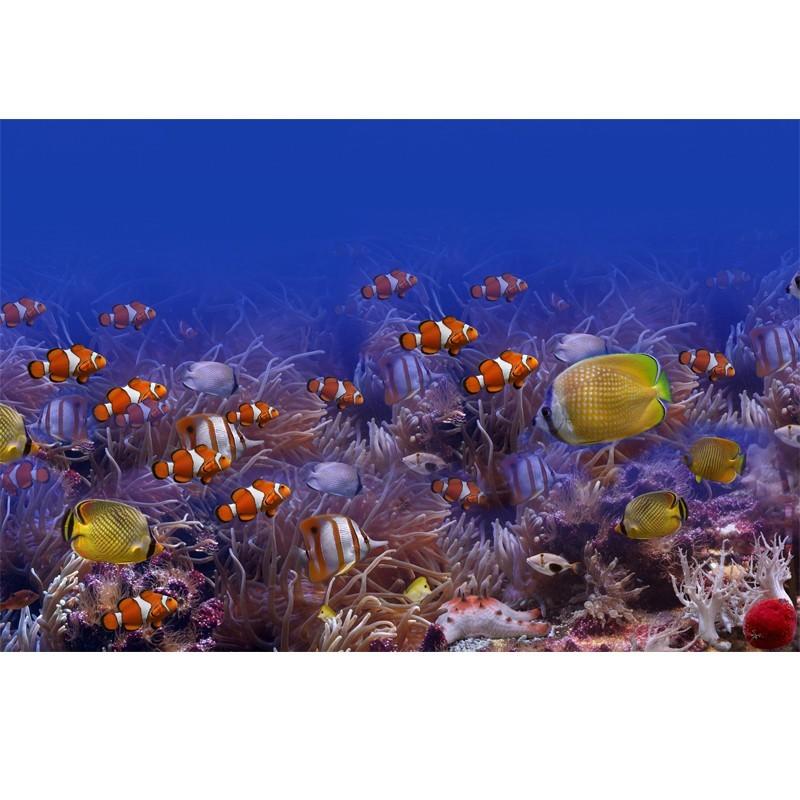 Fototapeta ryby, rafa koralowa, akwarium