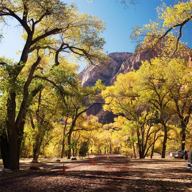 Fototapeta aleja drzew i góry