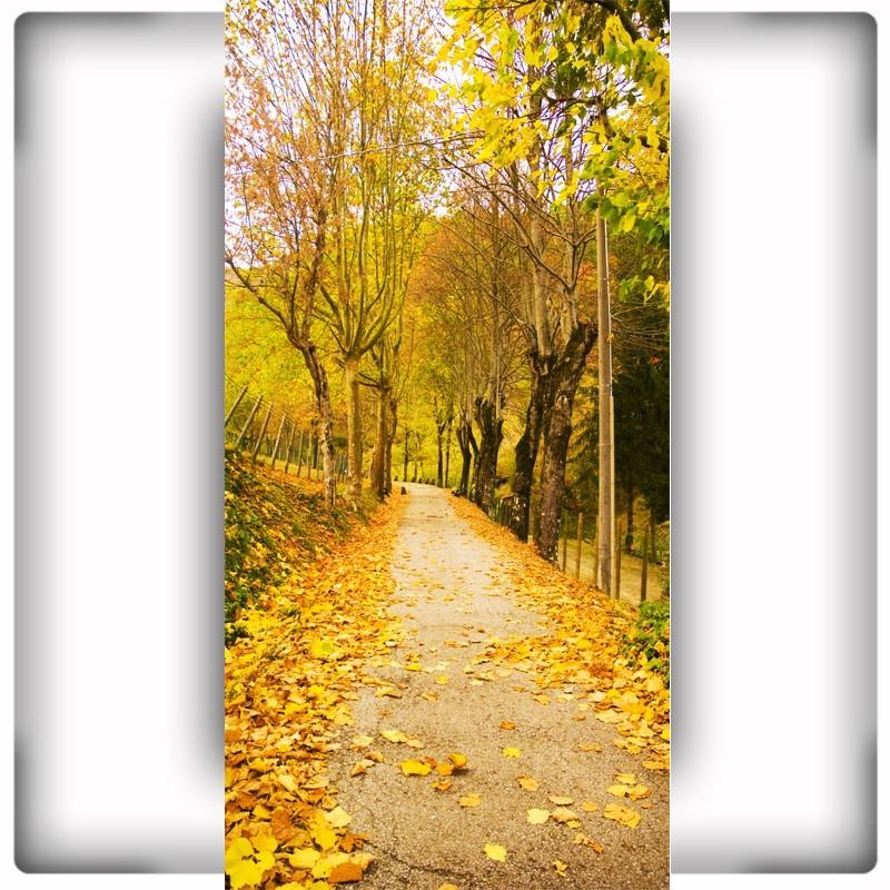 Fototapeta jesień alejka w parku