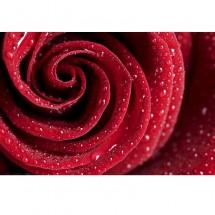 Pomysł na ścianę w jadalni przy stole - wodoodporna fototapeta czerwona róża