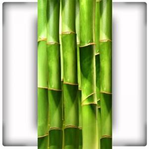 Bambusy XII
