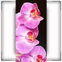 Orchidea IX