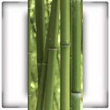 Fototapeta bambusy stonowana zieleń