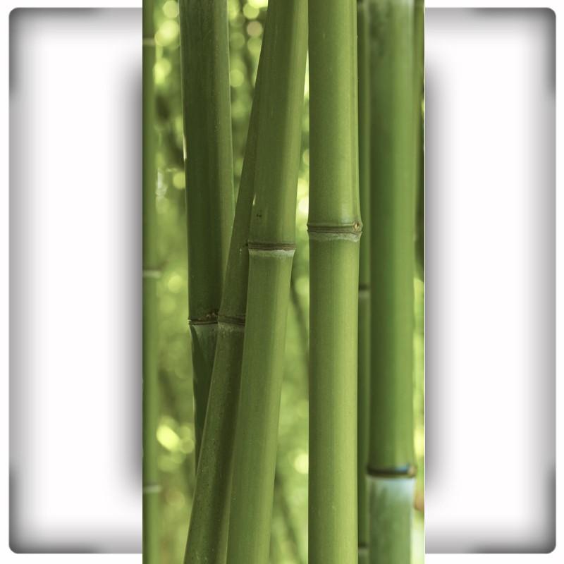 Fototapeta bambus na wąską ścianę