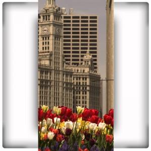 Fototapeta miasto z tulipanami