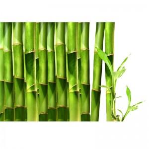 Bambusy II