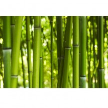 Bambuski V
