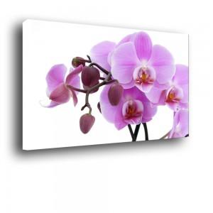 Orchidea nr 2009