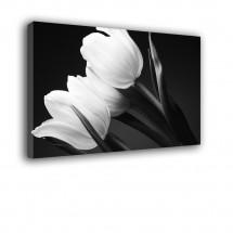 Obraz Tulipany nr 2028