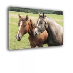 Konie nr 2065