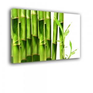 Bambusy nr 2085