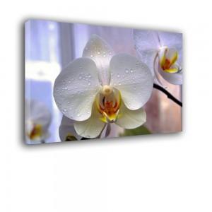 Orchidea nr 2101