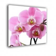 Orchidea nr 2042