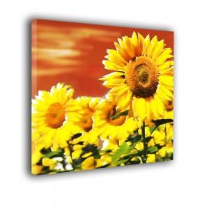 Słoneczniki nr 2145
