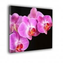 Obraz orchidea na czarnym tle nr 2171