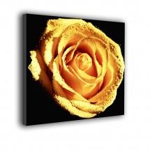 Róża nr 2140